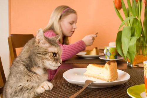 チーズケーキを狙う猫