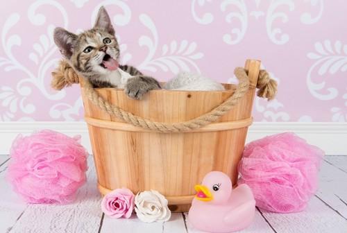 お風呂タイムを楽しんでいる猫