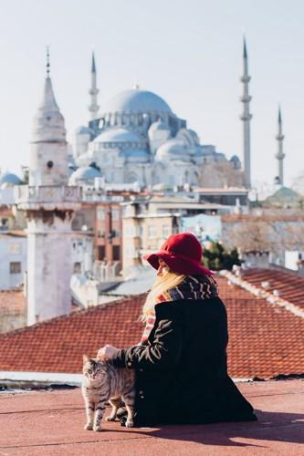 トルコの猫と人