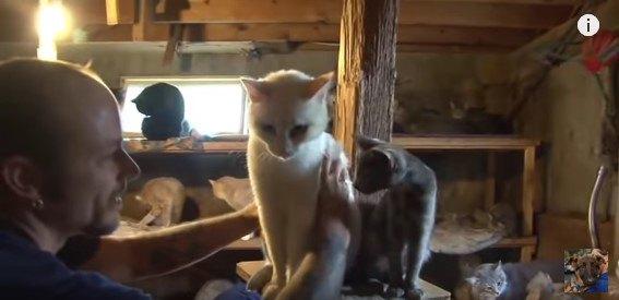 白猫に手を伸ばすスタッフ