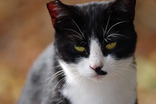 鋭い視線でこちらを警戒する猫
