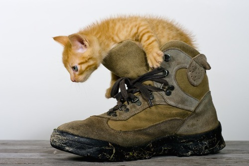 靴に入る茶トラの子猫