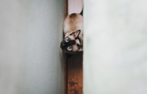 壁の間にいる子猫