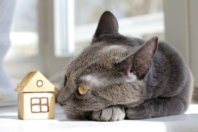 積み木の家と猫の写真