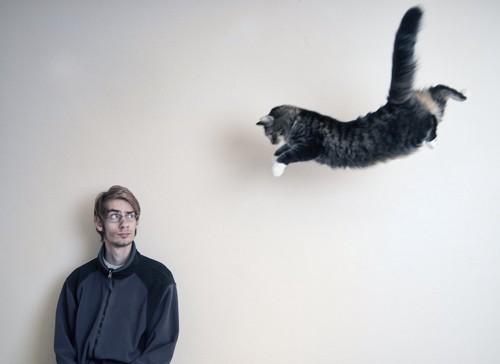 大きくジャンプする猫とそれを見る男性