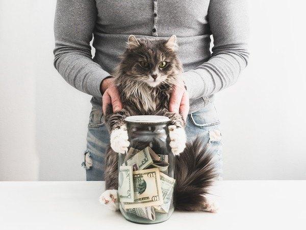 猫と人とビンに入ったお金
