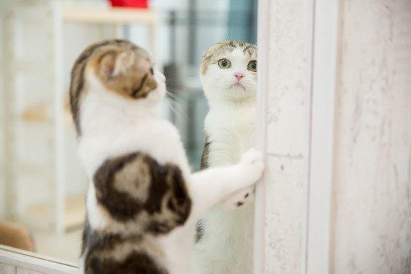 鏡を見つめる猫