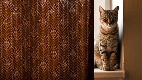 カーテンからのぞく猫