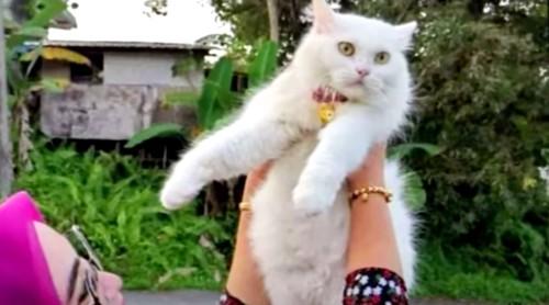 猫を持ち上げる女性