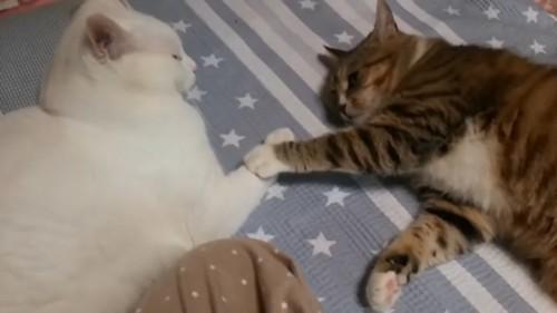 手を繋いで寝る猫