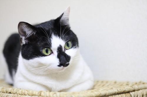 籠の蓋の上で香箱座りをする猫