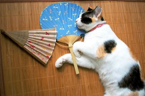 茣蓙の上で寝る猫と団扇と扇子
