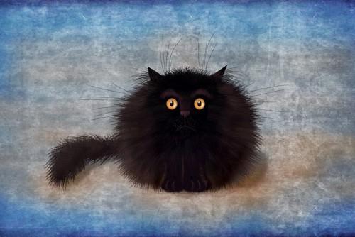 真っ黒な猫