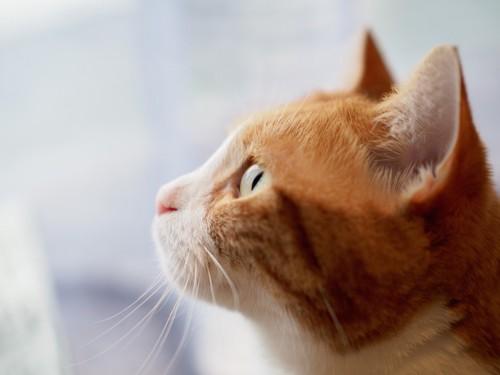 見上げる猫の横顔