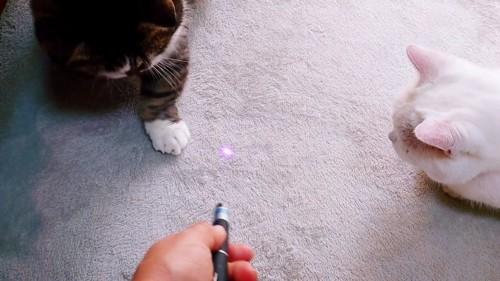 光を見る2匹の猫