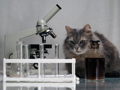 顕微鏡の隣に座る猫