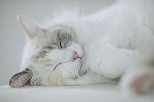 手足を伸ばして横向きで寝る猫
