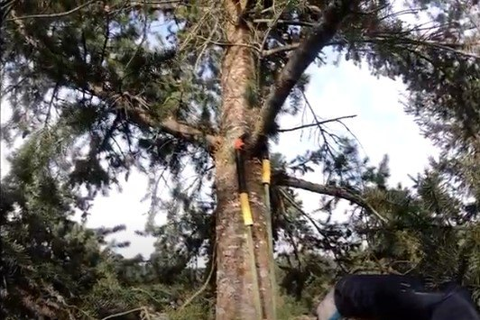 猫が立ち往生した木