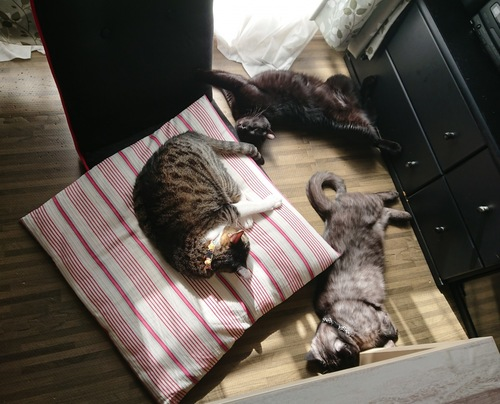 我が家の癒しの3匹