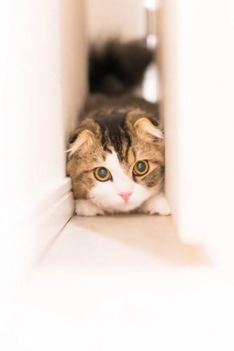 隙間に入る猫