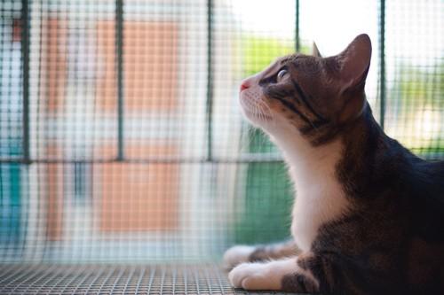 窓辺の猫の横顔