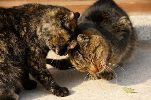 擦り寄る猫