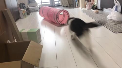 トンネルに向かって走る猫