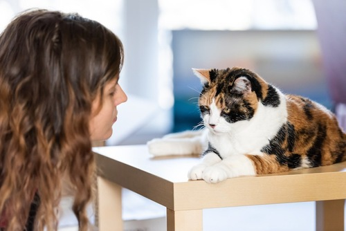 テーブルの上の猫を見つめる女性