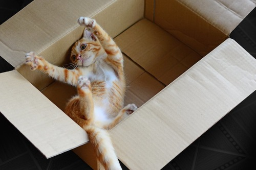 箱の中で遊ぶ子猫