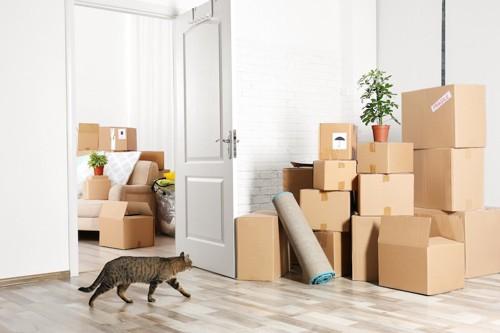 たくさんの段ボール箱が積まれた部屋を歩く猫