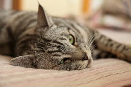 イライラしてる猫