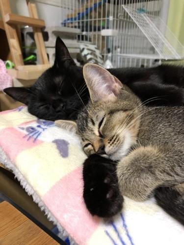 2匹で寝ている猫