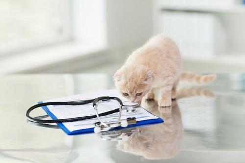 病院で聴診器の匂いを嗅ぐ子猫