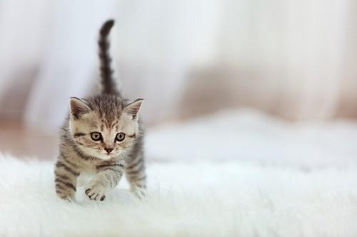 室内で走る猫