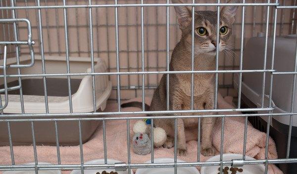 ペットホテルのケージにいる猫