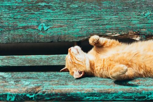 伸びている猫