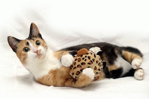 おもちゃを抱っこする猫