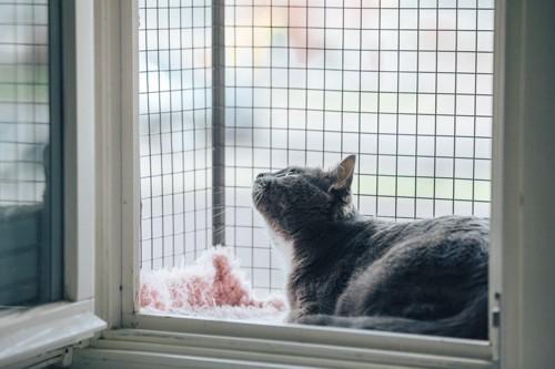 半屋外の窓辺にいる猫