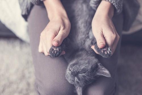 前足を握られている猫