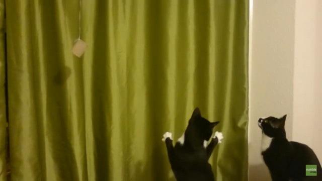 気持ちを伝えようとする猫