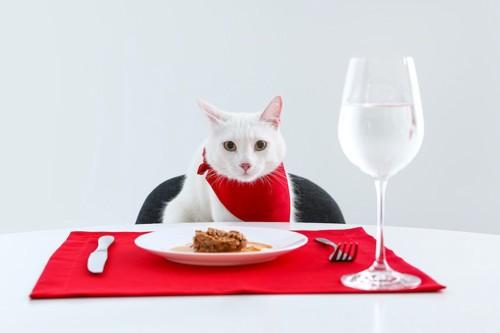 ディナーテーブルの席に座っている白猫