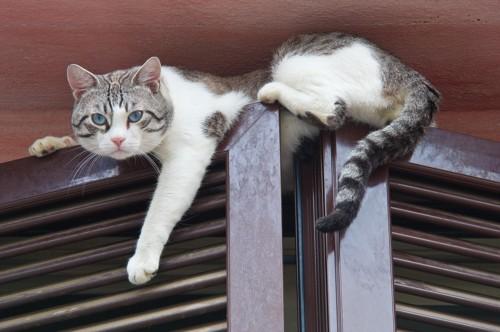 窓枠で寛ぐ猫