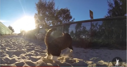 砂の上で戯れあう猫と犬