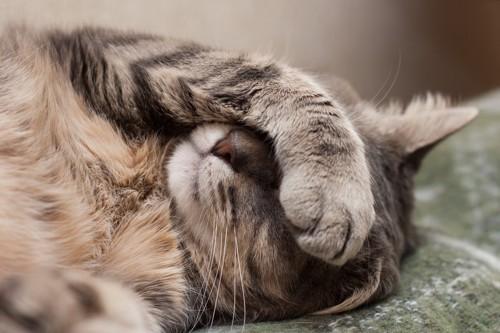 仰向けで前足で顔を隠して寝る猫