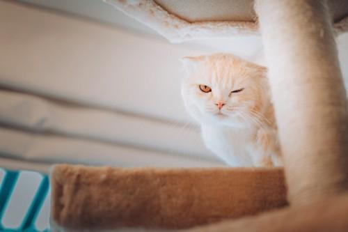 キャッとータワーの上の猫