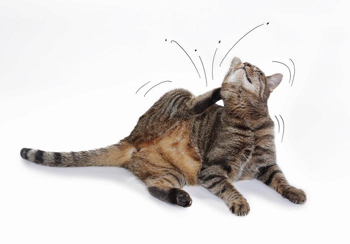 ダニがいて体を掻いてる猫