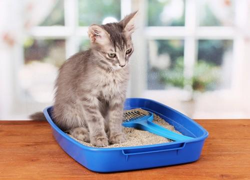 トイレでうなだれる猫