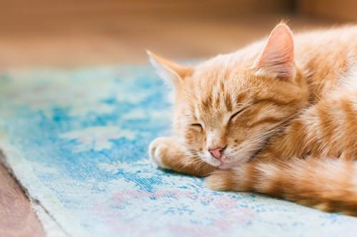 台所のマットの上で眠る猫