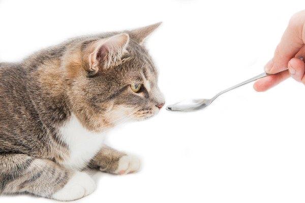 スプーンを顔の前に出された猫