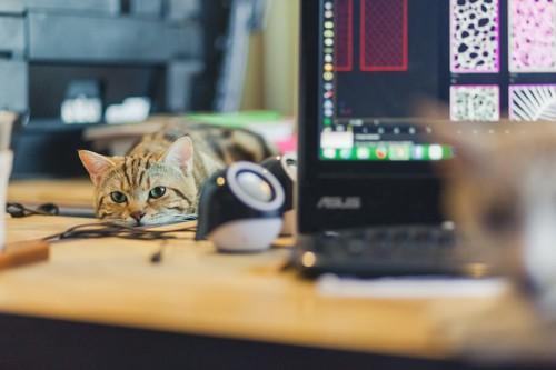 パソコンが置かれたテーブルの上で退屈そうにしている猫